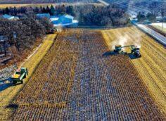Зависимость Незалежной от аграрного импорта усугубляется: поставки идут даже из Африки